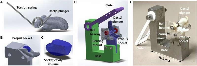 Engineers copy snapping shrimp to produce underwater plasma