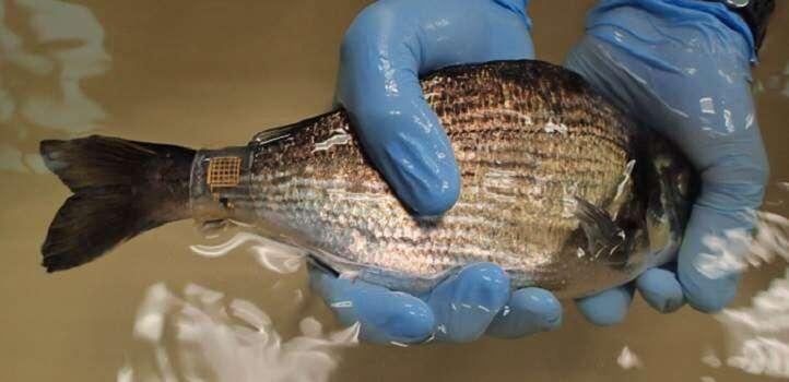Marine Skin dives deeper for better monitoring