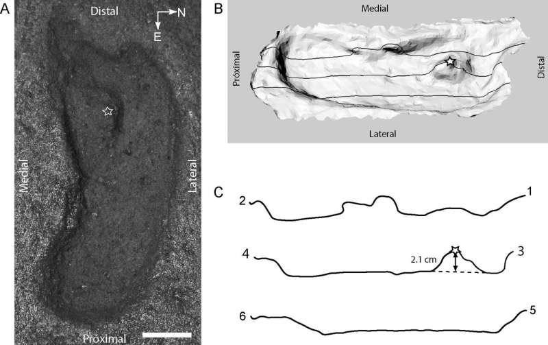 Footprint found in Chile is 'oldest' in Americas: scientists