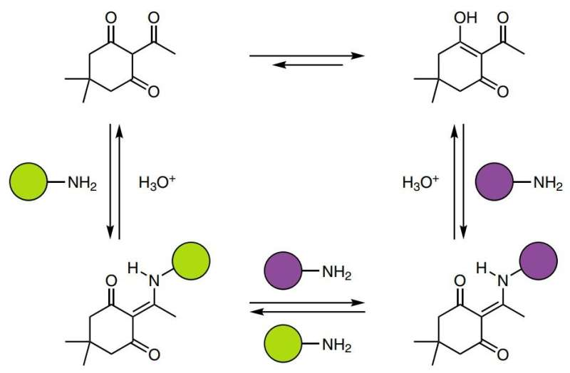 Chemists make thermoset polymer using amine and triketone that is recyclable