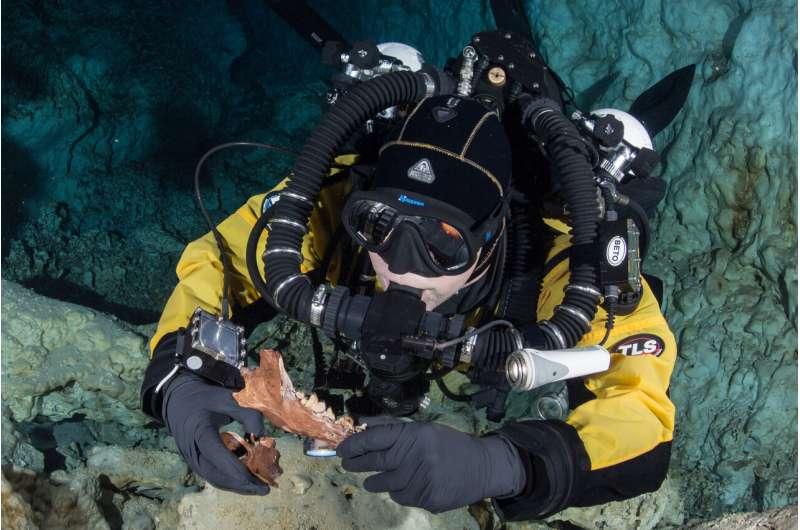 Animal bones found at bottom of Hoyo Negro shed light on The Great American Biotic Interchange