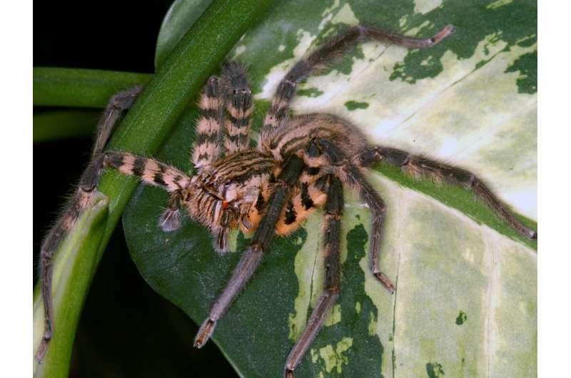 Spider venom is a dangerous cocktail