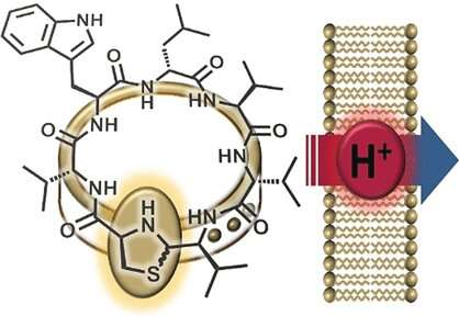 Chemical synthesis demonstrates that antibiotic from the human nose works by proton translocation