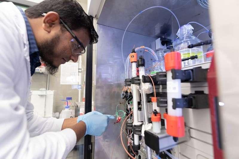 Turning up the heat on pathogenic bacteria
