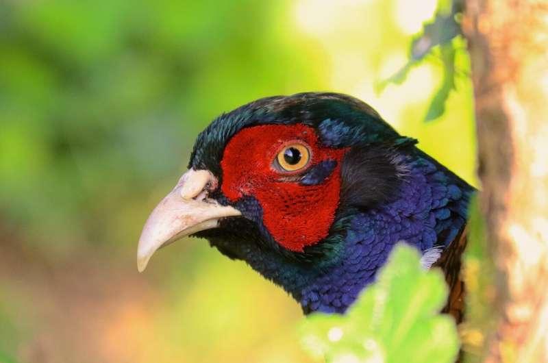 Successful 'alien' bird invasions are location dependent