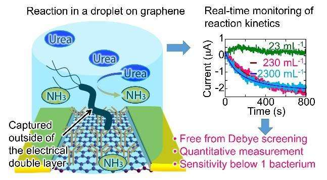 Using graphene and tiny droplets to detect stomach-cancer causing bacteria