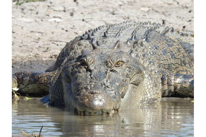 Holy crocodiles