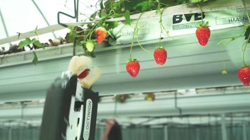 Robot uses photonic sensors to pick strawberries in gee-whiz numbers