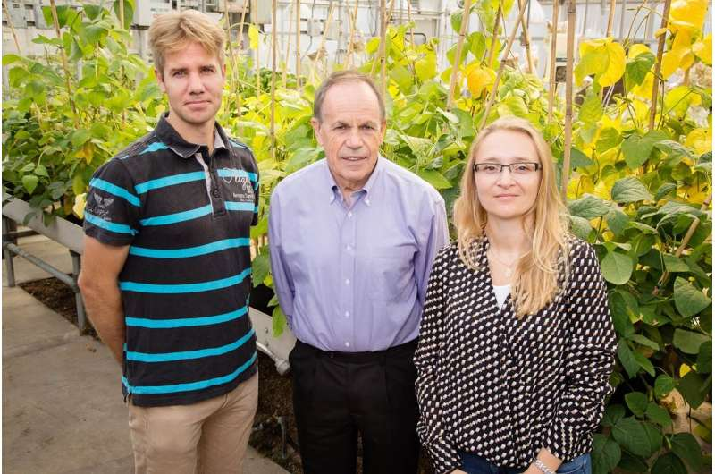 Improved model could help scientists better predict crop yield, climate change effects