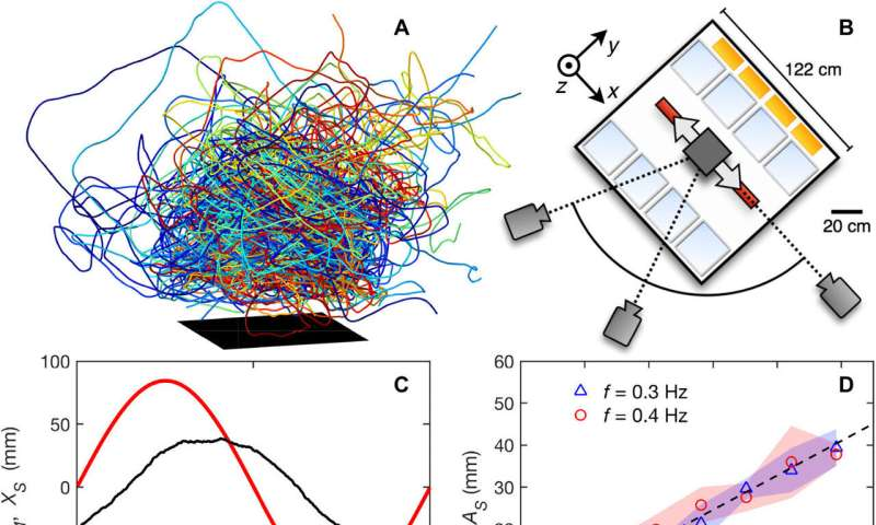 Midge swarms found to have mechanical properties and respond as a viscoelastic