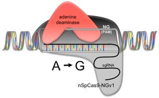 New genome editing technology for plant breeding