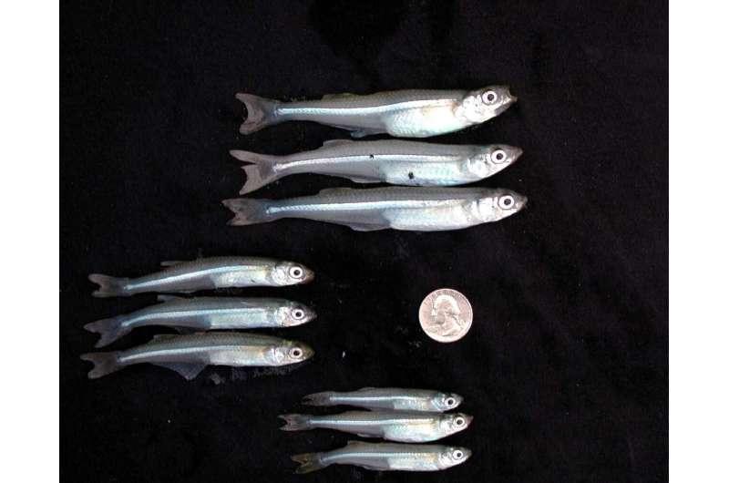 Genomic data reveal intense fish harvesting causes rapid evolution