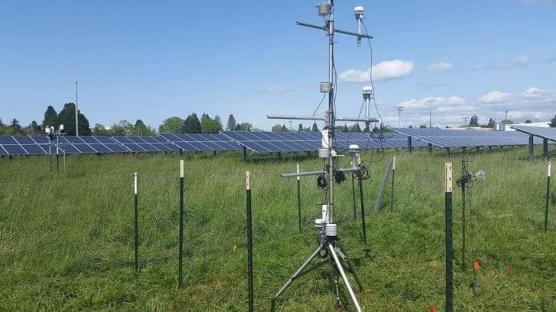 La instalación de paneles solares en tierras agrícolas maximiza su eficiencia, muestra un nuevo estudio