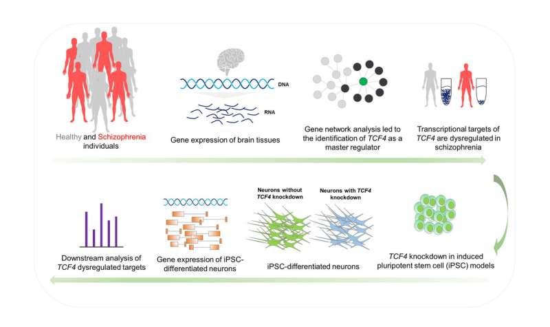 Scientists identify gene as master regulator in schizophrenia