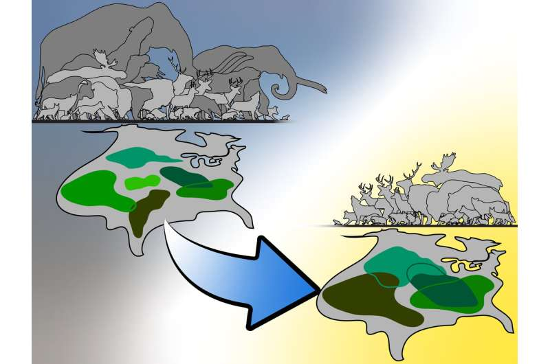 Division by subtraction: Extinction of large mammal species likely drove survivors apart