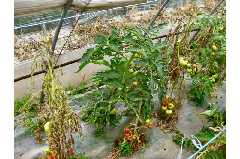 New research reveals soil microbes play a key role in plant disease resistance