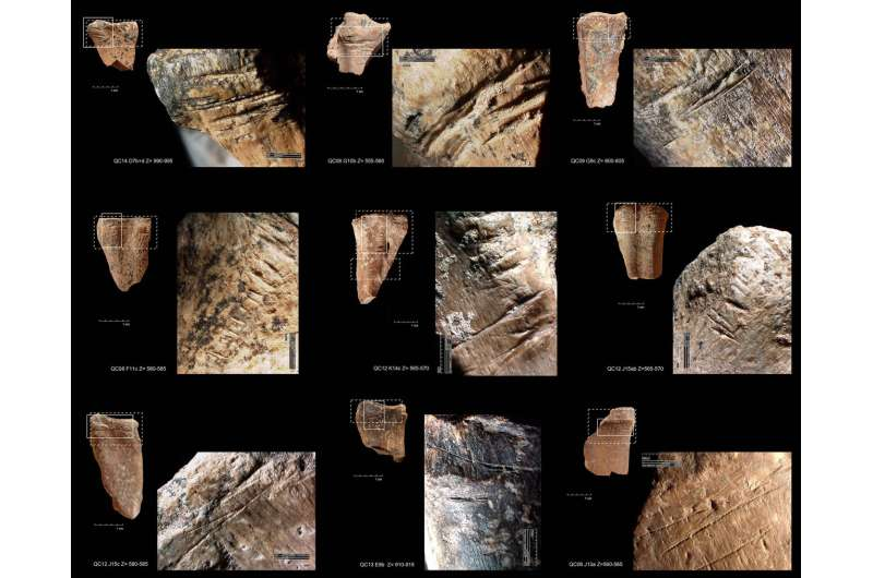 Study finds prehistoric humans ate bone marrow like canned soup 400,000 years ago