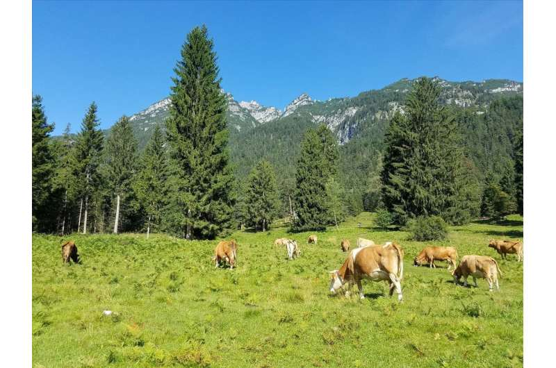 Study on climate protection: more forest – less meat