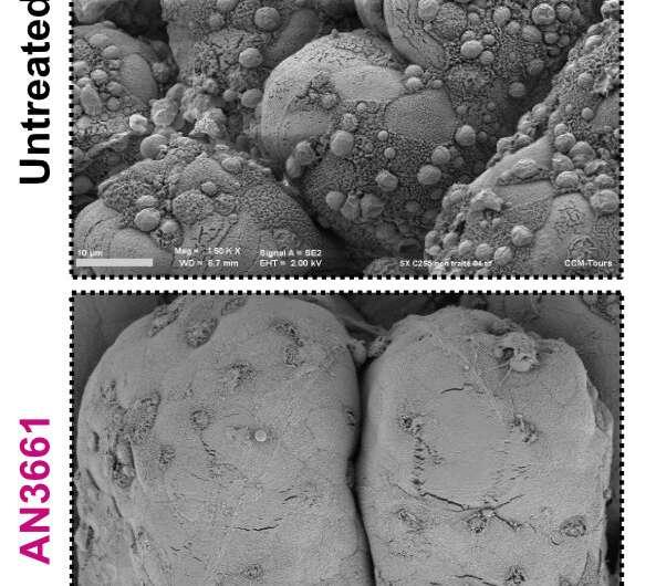 Cryptosporidium: Hot on the trail of a new anti-infective