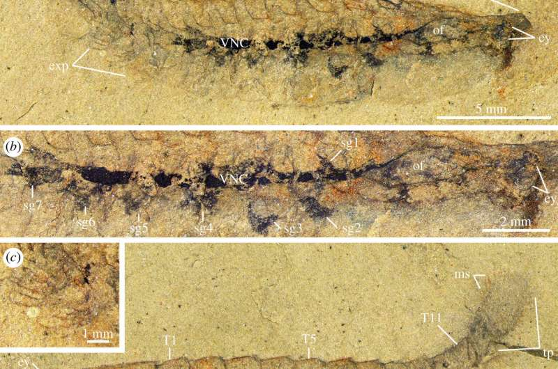 Researchers claim to have evidence of 500-million-year old fossilized arthropod brain