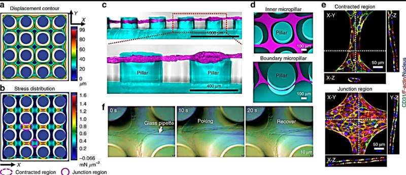 Engineering biomimetic microvascular meshes for subcutaneous islet transplantation