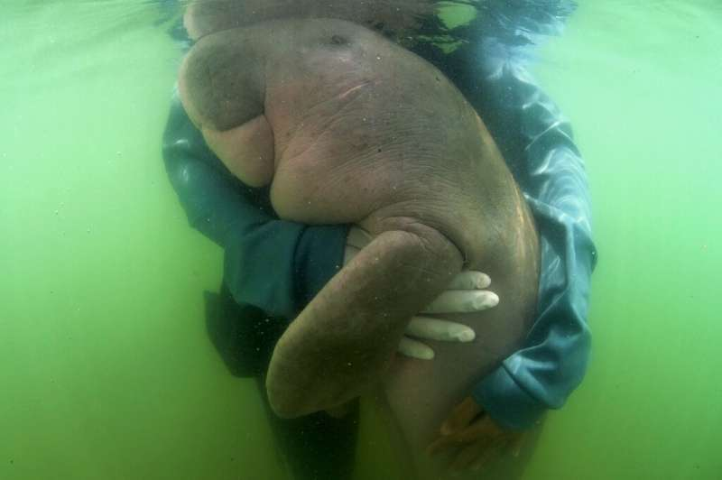 The discovery of the deer comes months after a sick baby dugong won hearts in Thailand as she fought for recovery, only to pass