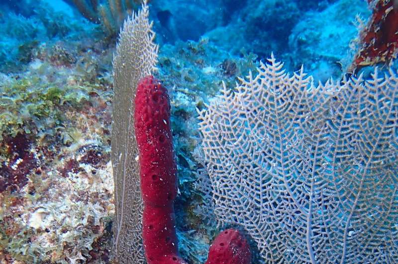 Scientists first to develop rapid cell division in marine sponges