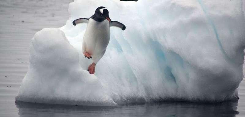 Study reveals climate change impact on Antarctic penguins