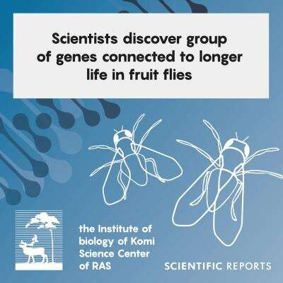 Scientists discover group of genes connected to longer life in fruit flies