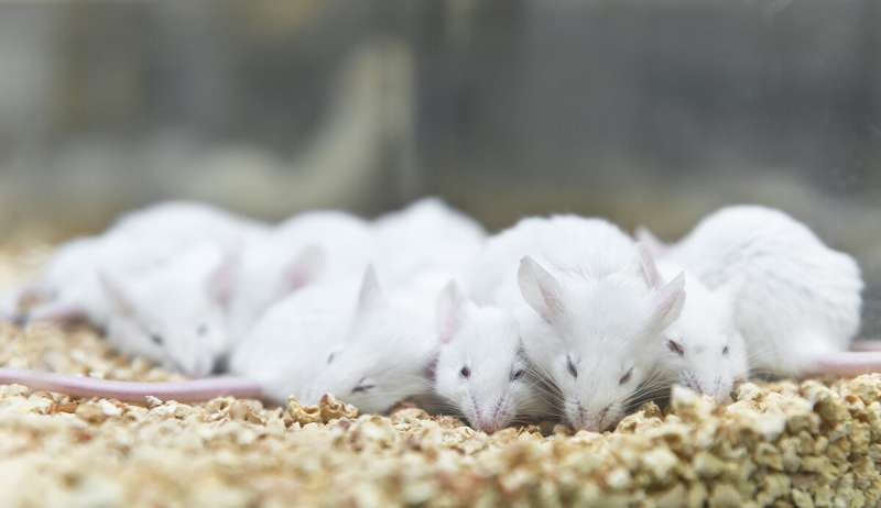 Machine-learning algorithm for automatically classifies sleep stages of lab mice