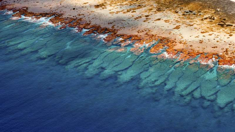 Scientists create largest collection of coral reef maps ever made