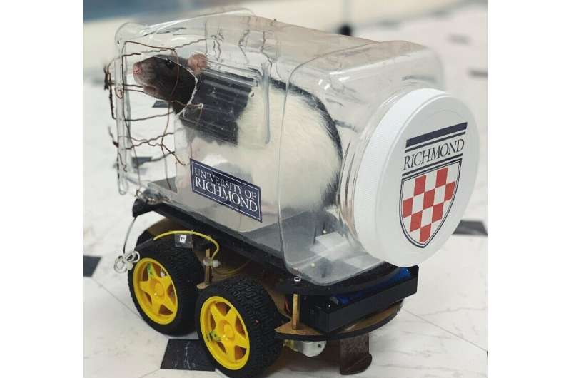 Scientists modified a robot car kit by adding a clear plastic food container to form a driver compartment with an aluminum plate