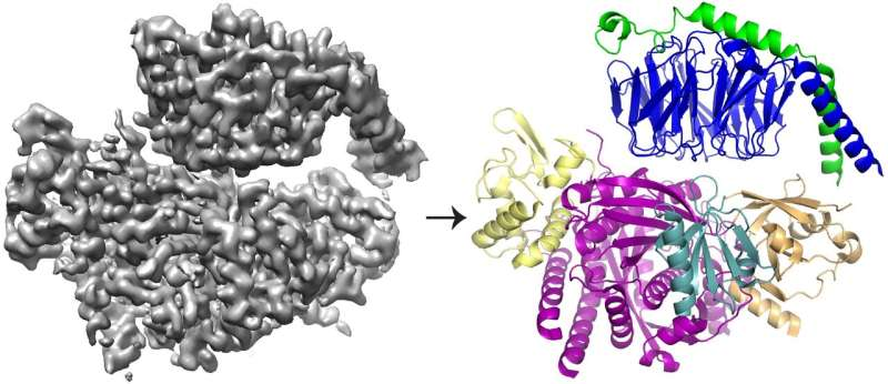 Study unveils the intricate way two proteins interact to promote cell movement, metastasis