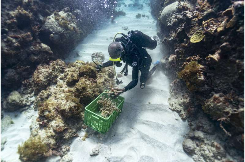 Surprise rescue of Jamaica coral reefs shows nature can heal