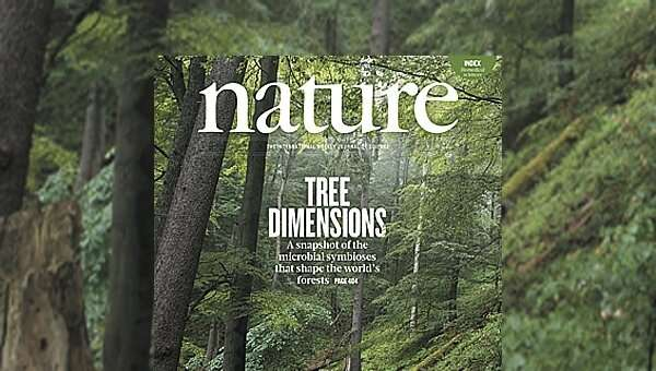 Climate change could affect symbiotic relationships between microorganisms and trees