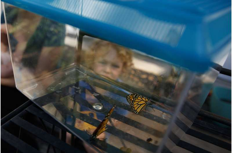Goodbye monarchs? Protection changes may imperil butterflies