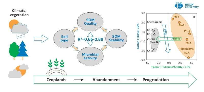 RUDN University soil scientists found out how abandoned arable land restores