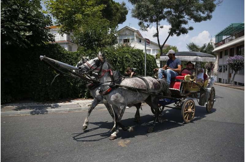 81 horses culled on Turkish island amid disease outbreak