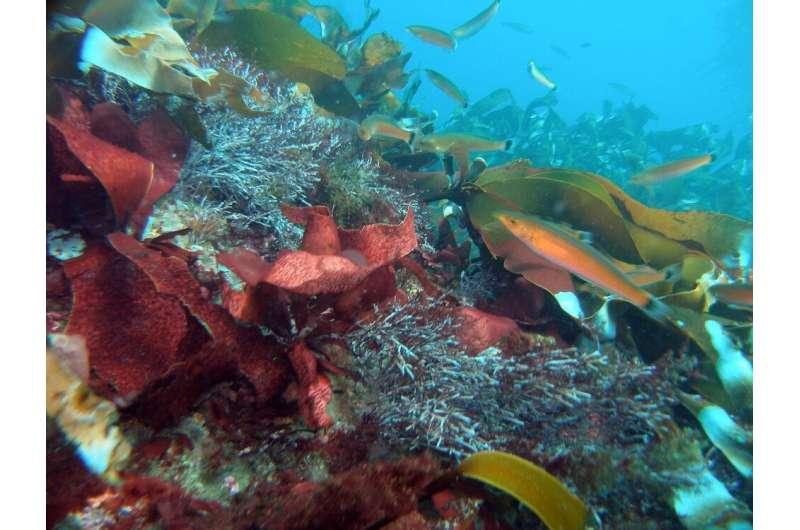Biodiversity is key to kelp forest health