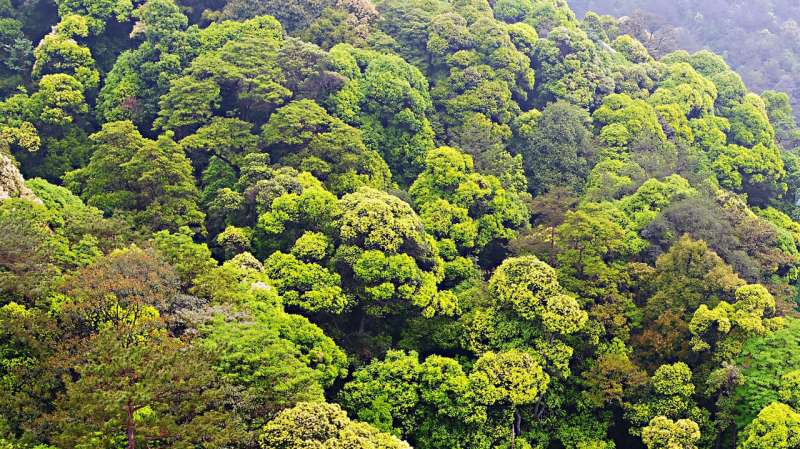 Scientists discover interaction between good and bad fungi that drives forest biodiversity
