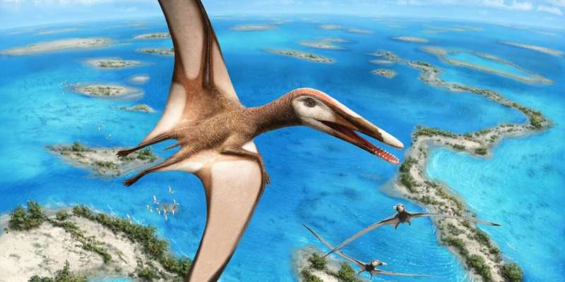 95-million-year-old fossil reveals new group of pterosaurs