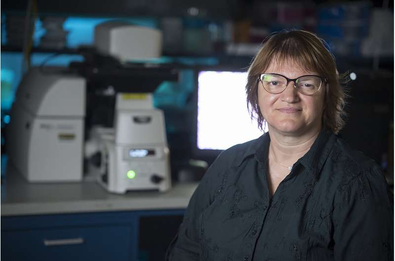 'A first for cancer research': New approach to study tumors