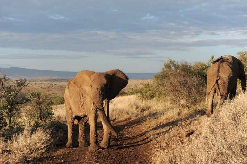 African specialists say the only real way to stem the poaching of elephant ivory and rhinoceros horns is to curb demand