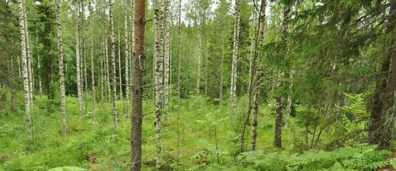 Albedo matters for the climate, and forestry can have an impact on it