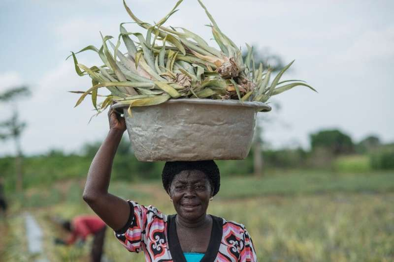 Although women make up more than half the farming work force in the developing world, they are far less likely than men to own t