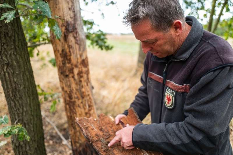 A massive reforestation programme is expected to take years and cost several billion euroes