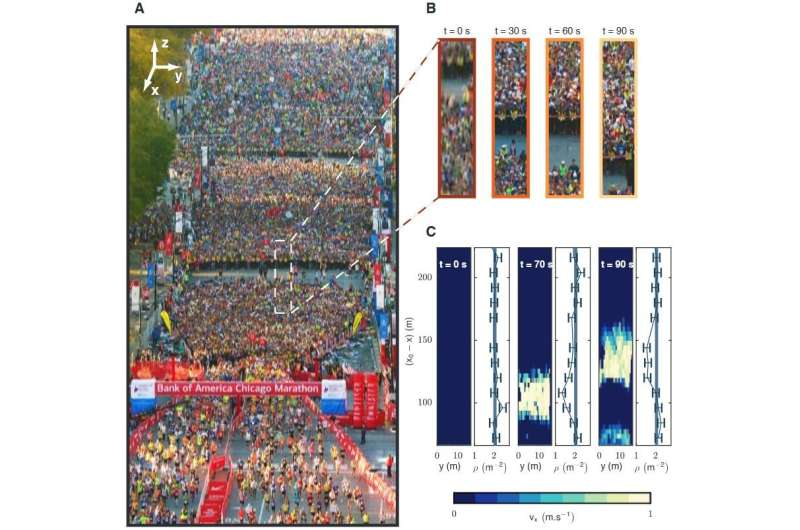 A model for describing the hydrodynamics of crowds