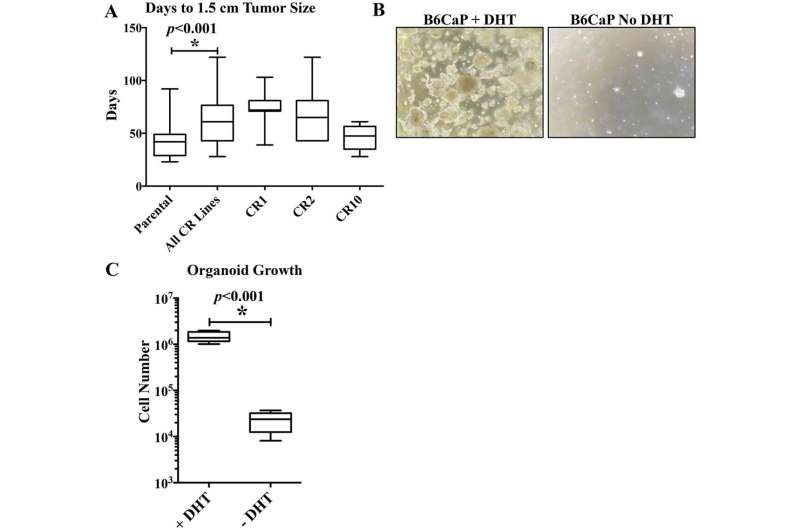A mouse model of prostate cancer bone metastasis in a syngeneic immunocompetent host