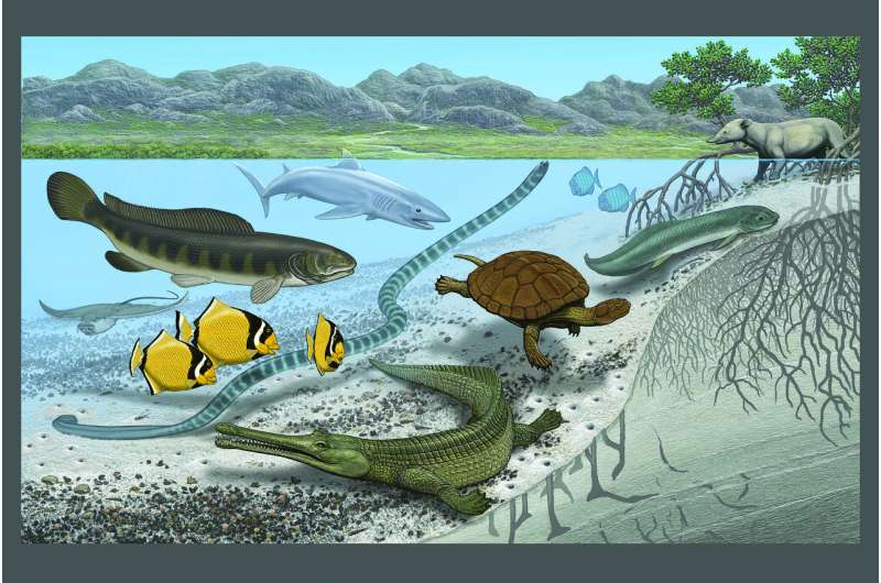 Ancient Saharan seaway shows how Earth's climate and creatures can undergo extreme change