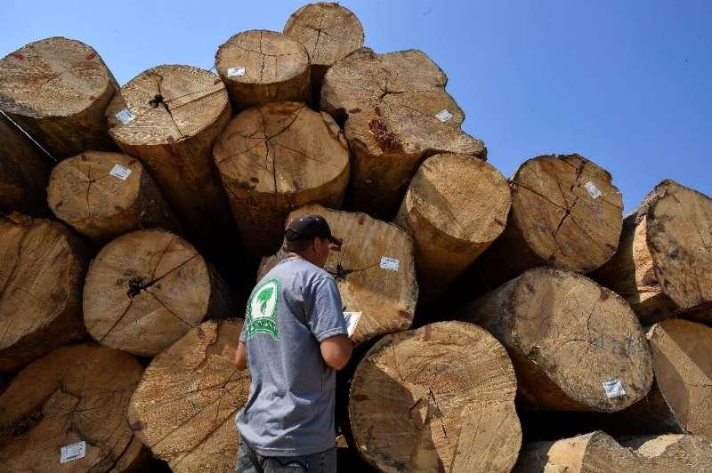 An employee at Rubens Zilio's sawmill inspects logs